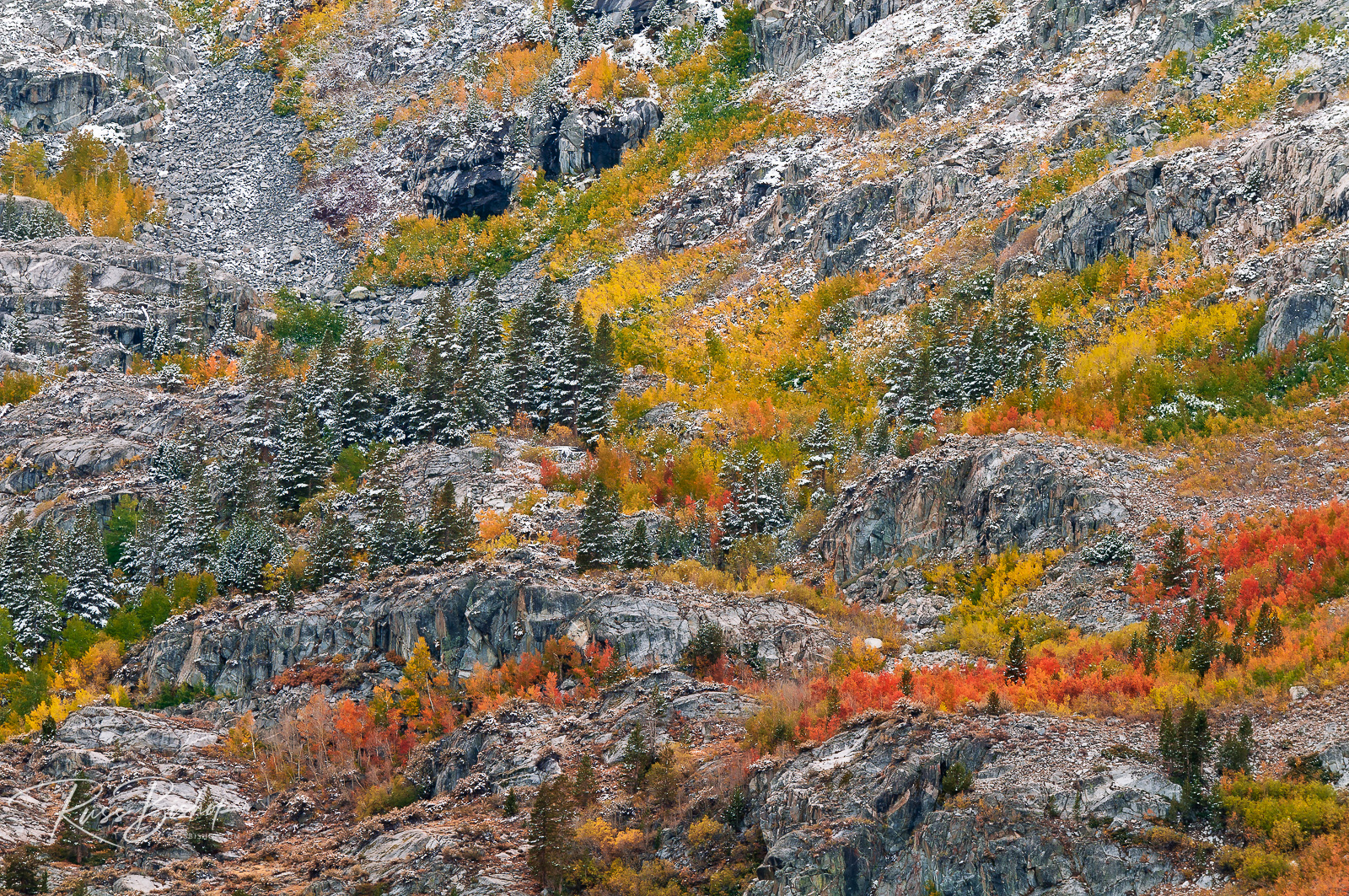 Autumn hues and fresh powder, John Muir Wilderness, California