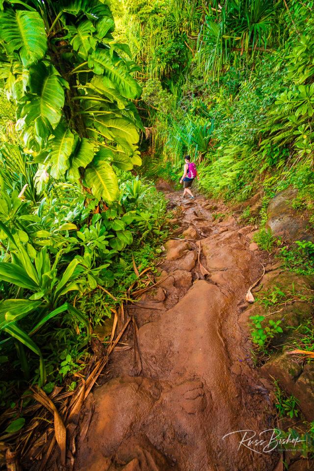 Lush vegetation along the Kalalau Trail, Na Pali Coast, Kauai, Hawaii